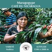 [ PHOTO DE VOYAGE ] ➡️ Maragogype ☕️ ARABICA d'origine du #Nicaragua   ⛰️ Altitude : Plantation située entre 1500 et 2000 mètres 🌱 Espèces & variétés : Arabica - Maragogype  TRÈS FAIBLE en #caféine. Reconnu par sa grosse fève, c'est un café doux et gourmand avec une saveur délicate de pomme/miel.  Très digeste et peu excitant, cette #tasse peut convenir aux personnes ayant une tension élevée et/ou des maux d'estomac. Votre coeur sera ainsi sauvegardé pour l'amour du café !  ___ N'hésitez pas à vous connecter sur notre site ✅ www.grainscafes.com #Cafés en #grains ou #moulus ou #capsules ☑️ Torréfaction 100% Artisanale ☕️  📍 26 rue Grande - Manosque 🕡 Mardi au samedi de 9h à 13h | 14h à 18h Plus d'infos ?! 👇 📱 04.65.10.00.67 📧 contact@grainscafes.com  #GrainsCafes #Manosque #coffee #coffeetime #coffeelover #cafe #coffeeshop #coffeeaddict #Torrefaction #coffeegram #specialtycoffee #ColumbiaFarmers #Mexique #Maragogype #origine #Arabica #naturaleza #adventure #Voyage #koffee